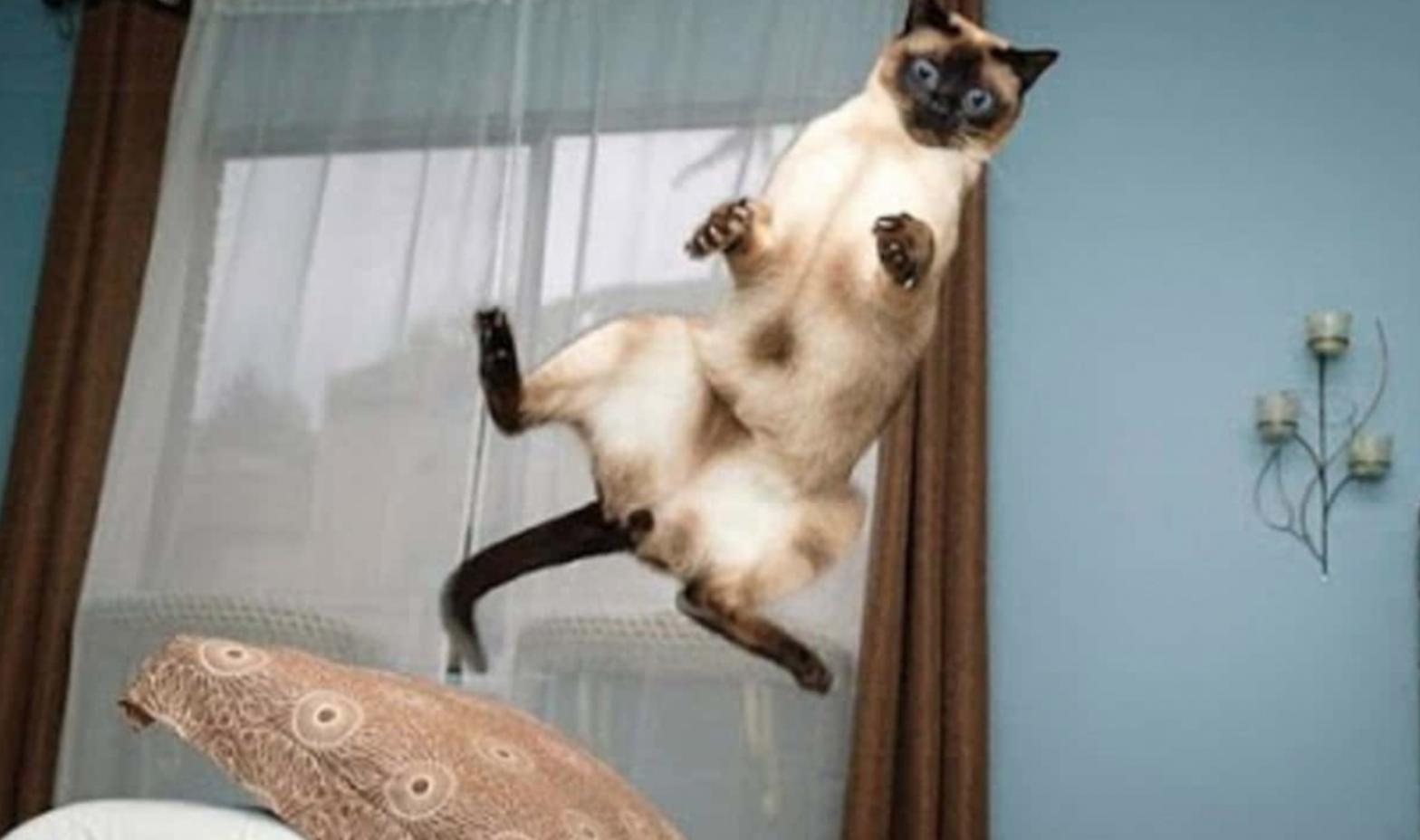 gatti buffi video divertente di gatti - Libertyfood.it